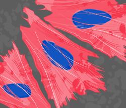 250x215-actin-v2-red