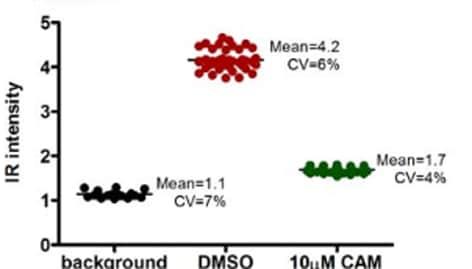ab14705 figure 1 v2-2 in cell elisa