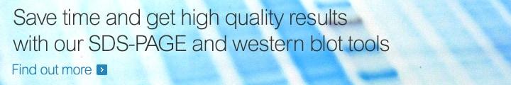 使用我们的SDS-PAGE和western blot工具节省时间并获得高质量的结果
