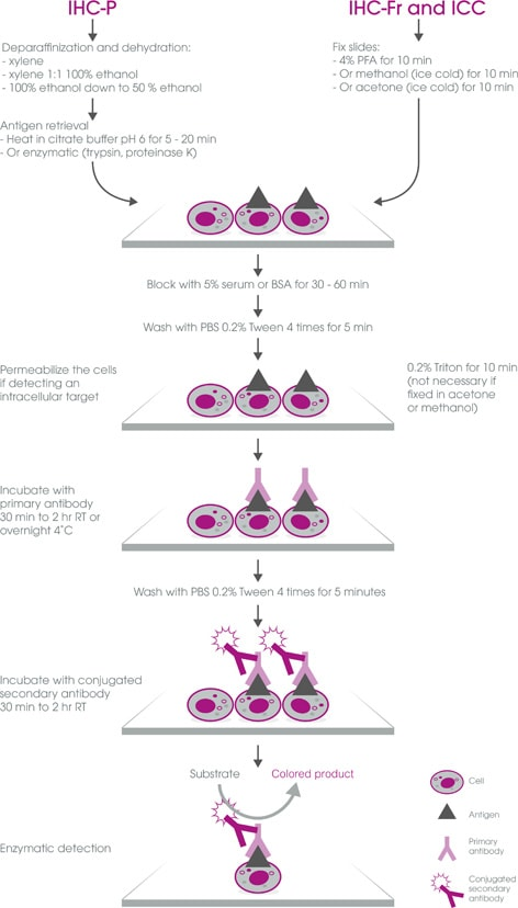 IHC guide v3 immunostaining workflow 472px
