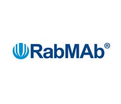 RabMAb rabbit monoclonal antibodies