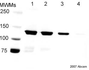 Western blot - 6X His tag® antibody (HRP) (ab1187)