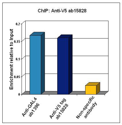 ChIP - V5 tag antibody - ChIP Grade (ab15828)