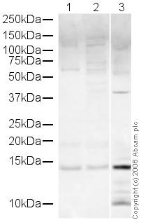Western blot - Histone H4 antibody (ab16483)