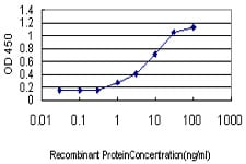 ELISA - Morphine antibody [3A6] (ab23357)