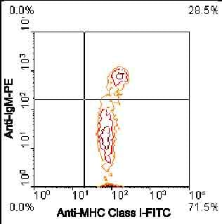 Flow Cytometry - MHC class I antibody [F21-2] (FITC) (ab24881)
