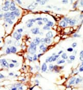 Immunohistochemistry (Formalin/PFA-fixed paraffin-embedded sections) - DOK2 antibody (ab37832)