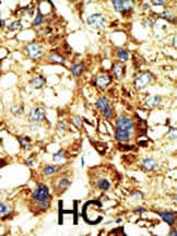 Immunohistochemistry (Formalin/PFA-fixed paraffin-embedded sections) - Dnmt3a antibody (ab4897)