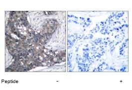Immunohistochemistry (Paraffin-embedded sections) - eIF2 alpha antibody (ab47508)