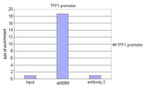 ChIP - FOXA1 antibody - ChIP Grade (ab5089)