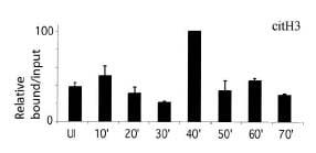 ChIP - Histone H3 (citrulline 2 + 8 + 17) antibody [CitH3] - ChIP Grade (ab5103)