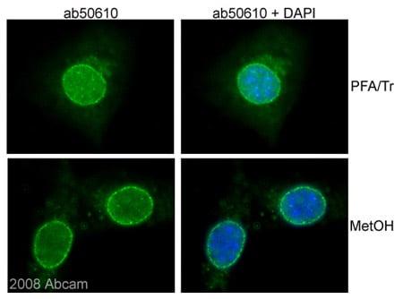 Immunocytochemistry/ Immunofluorescence - NUP98 antibody [2H10] (ab50610)