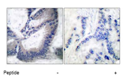 Immunohistochemistry (Paraffin-embedded sections) - iNOS antibody (ab53769)