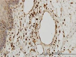 IHC-P - beta 2 Microglobulin antibody (ab54810)