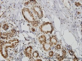 IHC-P - IL15 antibody (ab55276)