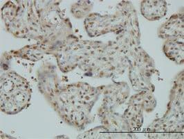 IHC-P - TIP120A antibody (ab57658)