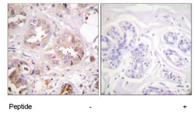 Immunohistochemistry (Paraffin-embedded sections) - Cdk7 antibody (ab59392)