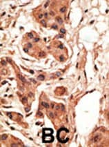 Immunohistochemistry (Formalin/PFA-fixed paraffin-embedded sections) - NRG4 antibody (ab60090)