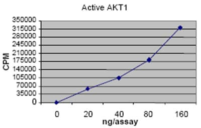 Functional Studies - AKT1 protein (Tagged) (ab62279)