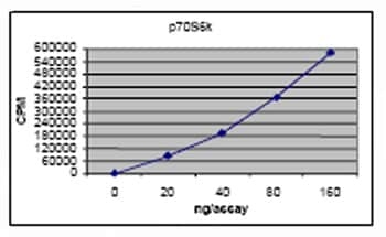 Functional Studies - S6K protein (Active) (ab62291)