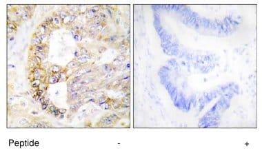 Immunohistochemistry (Formalin/PFA-fixed paraffin-embedded sections) - Anti-COX IV antibody (ab64885)