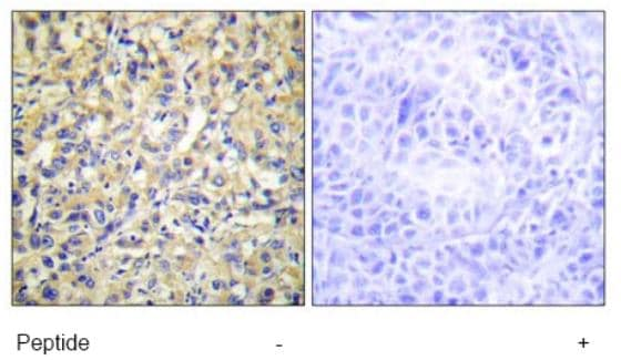 Immunohistochemistry (Formalin/PFA-fixed paraffin-embedded sections) - DUSP9 antibody (ab70129)