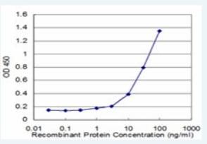 ELISA - RHOG antibody (ab76508)