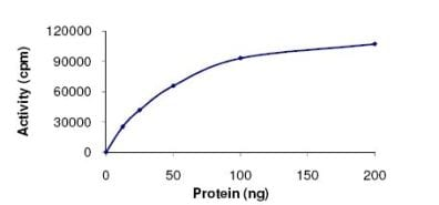 Functional Studies - Active human Casein Kinase 1 alpha full length protein (ab102102)