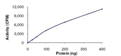 Functional Studies - IKK alpha protein (Active) (ab102103)