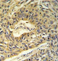 Immunohistochemistry (Formalin/PFA-fixed paraffin-embedded sections) - ATP5A antibody (ab103431)