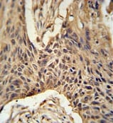 Immunohistochemistry (Formalin/PFA-fixed paraffin-embedded sections) - LPPR4 antibody (ab104104)