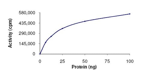 Functional Studies - ERK1 protein (Active) (ab105904)