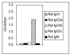 ELISA - IgG2c antibody [KT99] (HRP) (ab106789)