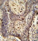 Immunohistochemistry (Formalin/PFA-fixed paraffin-embedded sections) - PPRC1 antibody (ab107384)