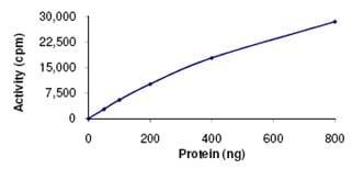 Functional Studies - NLK protein (ab107700)