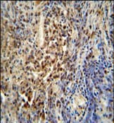 Immunohistochemistry (Formalin/PFA-fixed paraffin-embedded sections) - PUS3 antibody (ab108027)