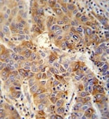 Immunohistochemistry (Formalin/PFA-fixed paraffin-embedded sections) - VAMP4 antibody (ab108051)