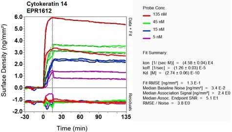 Other-Anti-Cytokeratin 14 antibody [EPR1612](ab108417)