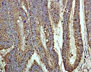 Immunohistochemistry (Formalin/PFA-fixed paraffin-embedded sections)-Anti-Cpn10 antibody [EPR4476](ab108600)