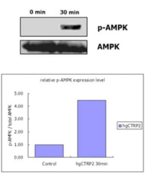 Functional Studies - CTRP2 protein (ab109155)