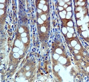 Immunohistochemistry (Formalin/PFA-fixed paraffin-embedded sections) - USP10 antibody [EPR4261] (ab109219)