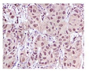 Immunohistochemistry (Formalin/PFA-fixed paraffin-embedded sections) - Leukotriene A4 hydrolase antibody [EPR5712] (ab109434)