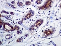 Immunohistochemistry (Formalin/PFA-fixed paraffin-embedded sections) - FNTB antibody [EPR4707] (ab109625)