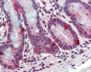 Immunohistochemistry (Formalin/PFA-fixed paraffin-embedded sections) - ARL2 antibody (ab109742)