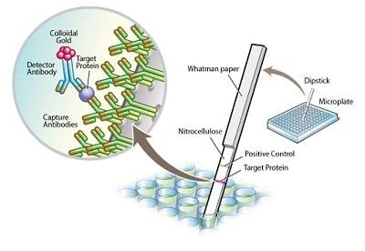 Sandwich ELISA - Complex IV Human Protein Quantity Dipstick Assay Kit (ab109877)