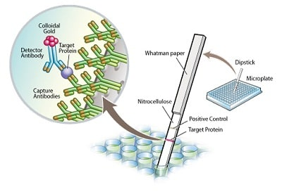 Sandwich ELISA - MetaPath™ Mito Disease 4-Plex Dipstick Array (ab109879)