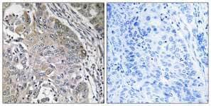 Immunohistochemistry (Formalin/PFA-fixed paraffin-embedded sections) - SPINK6 antibody (ab110830)