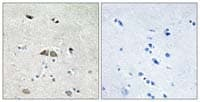 Immunohistochemistry (Formalin/PFA-fixed paraffin-embedded sections) - RPL39L antibody (ab110983)
