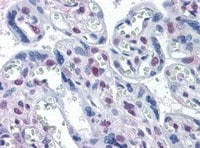 Immunohistochemistry (Formalin/PFA-fixed paraffin-embedded sections) - DRAK1 antibody [4D12] (ab111963)