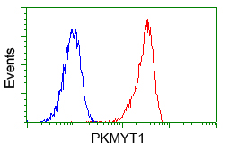 Flow Cytometry - Anti-PKMYT1 antibody [2B4] (ab114022)